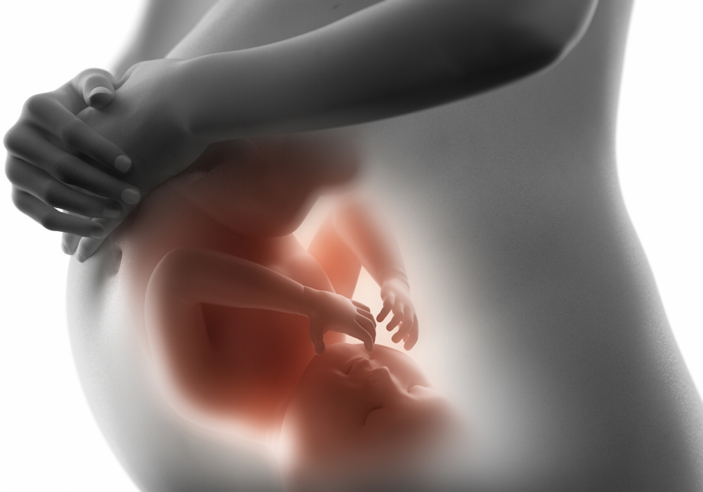 How Your Fetus Grows During Pregnancy